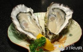 Oysters can change gender according to their needs