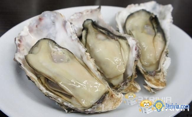 Edible oysters will not give birth to pearls