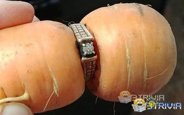 The 13-year-old ring was retrieved by carrots?