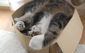 Cat Trivia:Why do cats like small spaces?