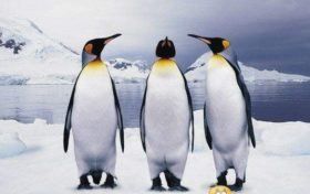 Penguin Trivia:Why can't I see penguins in the Arctic Circle?