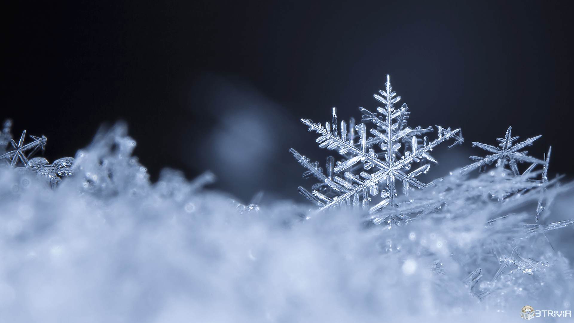 Snow Trivia:Snowflakes have at least 35 different shapes