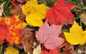 Fall Trivia:Why does the leaves change color?