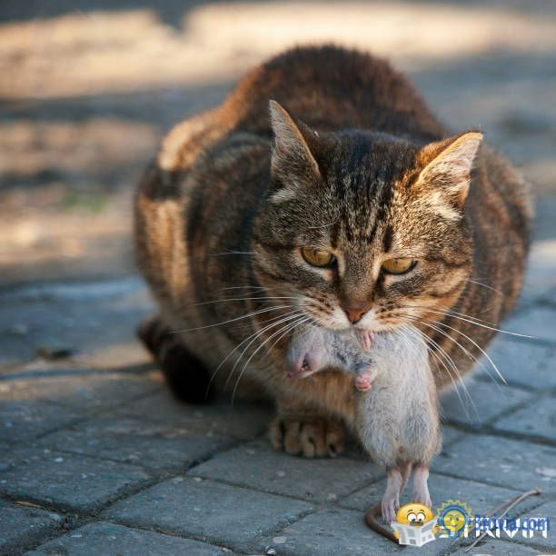 "Cat trivia:When a cat, a dead rodent, insect or bird gives you a ""gift"""
