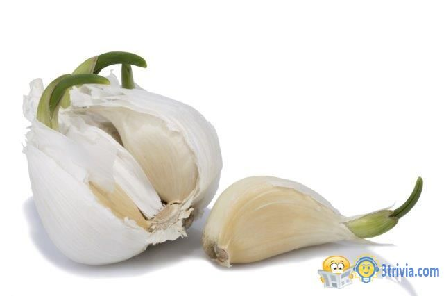 Garlic trivia:Can garlic eat after germination?