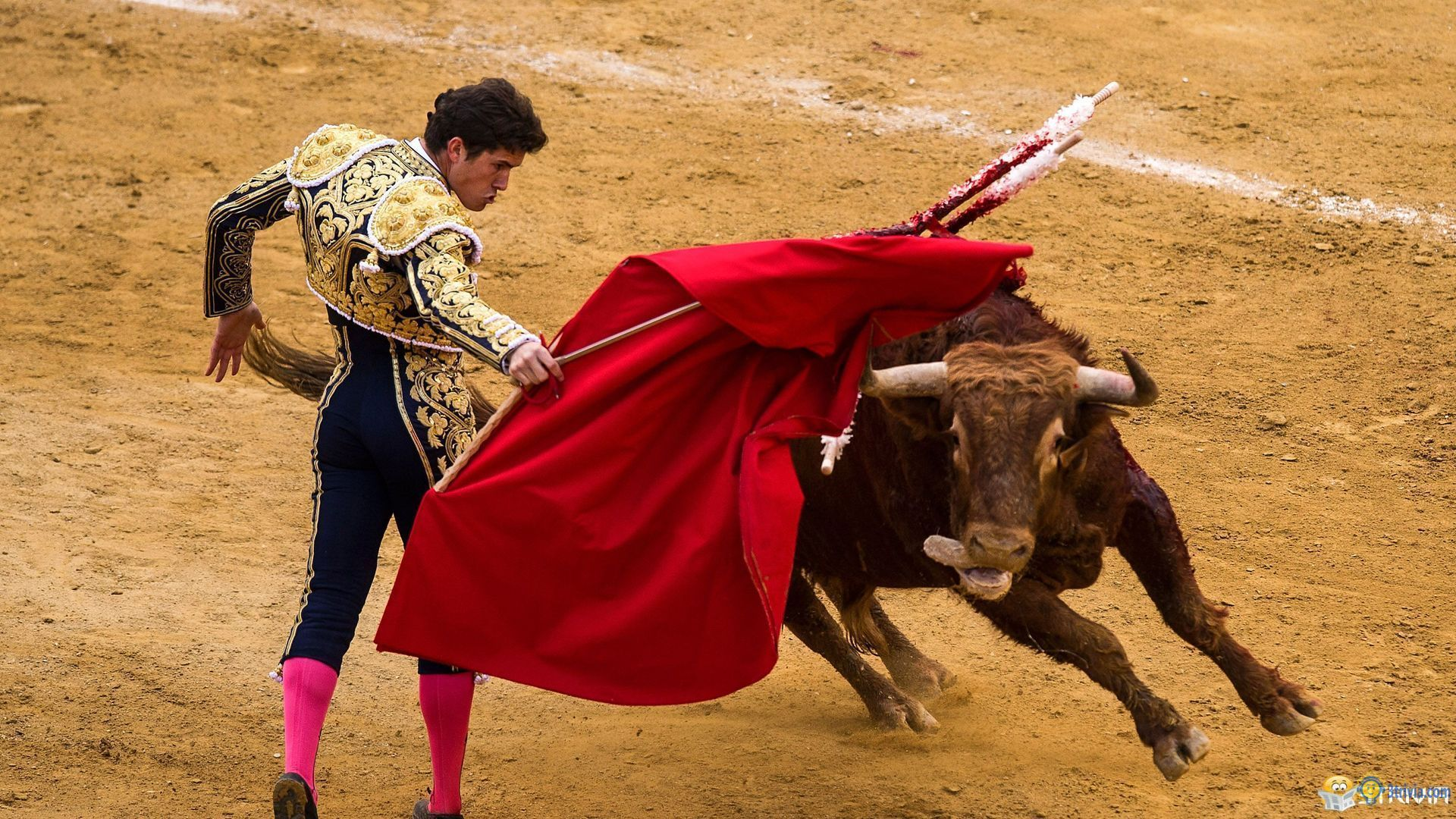 Bullfighting Trivia:Why use red cloth?