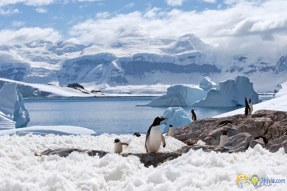 Temperature trivia:Antarctic cold or arctic cold