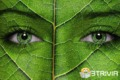 Color trivia:Looking at the green color does not have much benefit for our eyes?