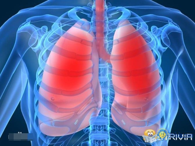 Lung trivia:Human lung airways have a length of 2400 km