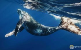 Animal trivia:Desolate Death in the World-Whale Fall