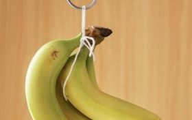 Banana Trivia:Bananas are not easy to rot when hung on the tree is true!