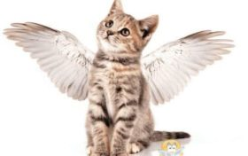 Cat Trivia:Is a long-winged cat real?