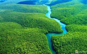 Oxygen trivia: earth's oxygen most of the amazon rainforest?