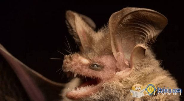 Bat trivia: Is it the animal with the most deadly viruses in the world?