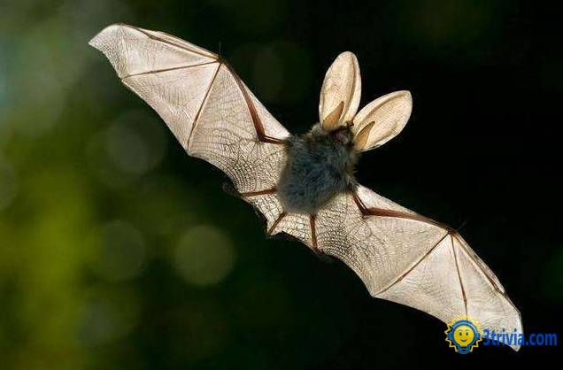 Animal trivia: the world 's most viral animal bat