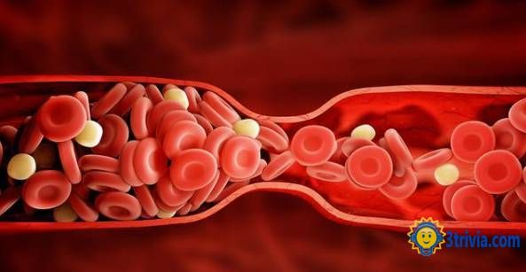 The length of human blood vessels can be two and a half times around the earth.
