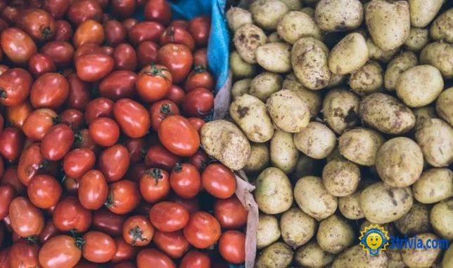 Vegetable trivia: Solanum vegetables are harmful to the human body, is it true