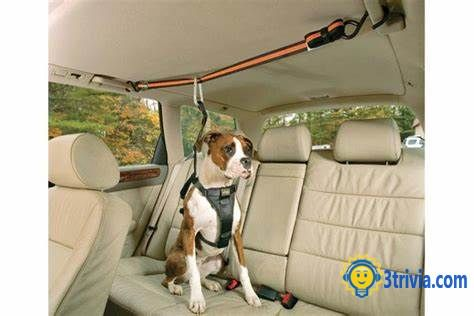 Invention trivia: Kurgo Car Zip Line Harness, a favorite invention of dog owners